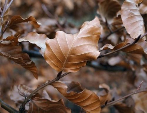 Prepara tu piel para el otoño