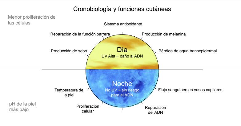 Grafico cronobiología